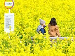 这个日本爸爸在大大天地里拍摄的姐弟小小背影,是世界最美丽的风景没有之一